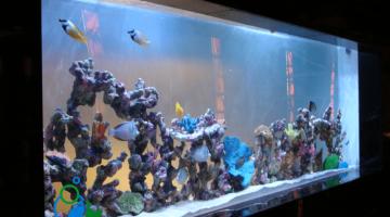 Mall Aquarium